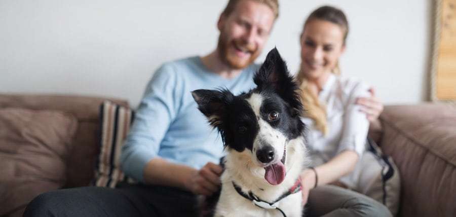 Millennials Now Own More Pets – So, Baby Boomers Move Aside!!