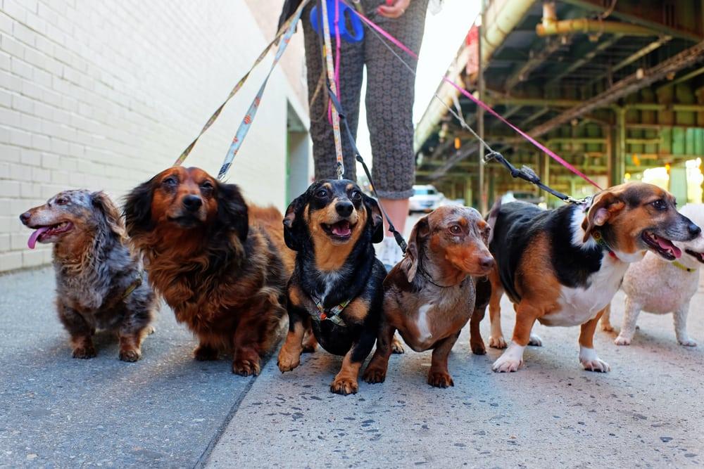 The Advantage of a Dog Walking Company